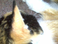 Patches curled up on the couch this past Sunday, September 14th: Credit: Rolly